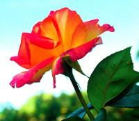 flower0046