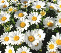 flower50